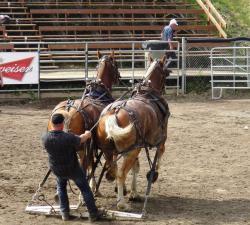 tire de chevaux