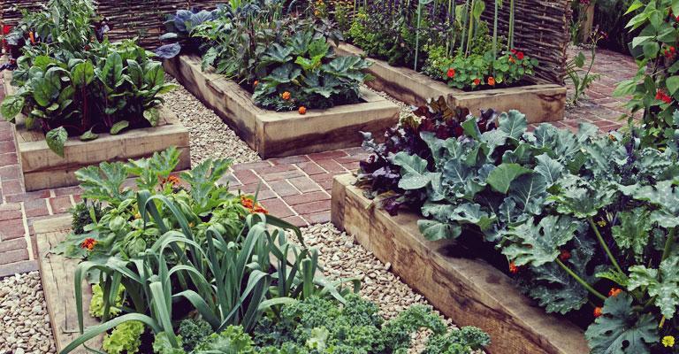 Myke companion planting guide gardening